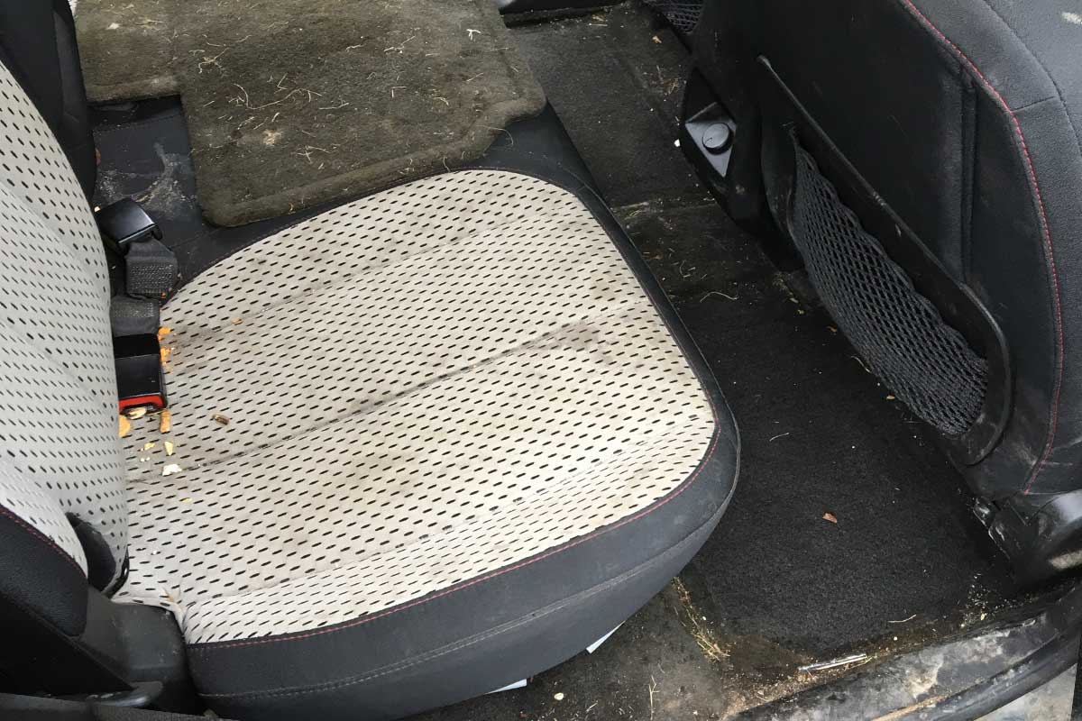back seat stain removal detailed before